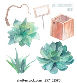 Watercolor succulent set. Isolated objects: wood box, rustic card, succulents, tree branch. Hand painted vintage garden illustration. Vector floral elements.