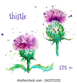 watercolor thistle