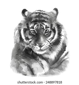 Watercolor tiger 1. Vector illustration