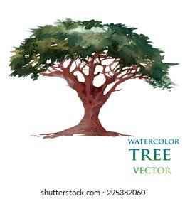 Watercolor tree. Cedar.