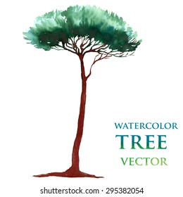 Watercolor tree. Stone-pine. Nut-pine.
