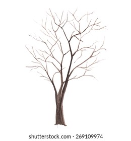 Watercolor tree. Tree without leaves silhouette isolated on white background. vector illustration