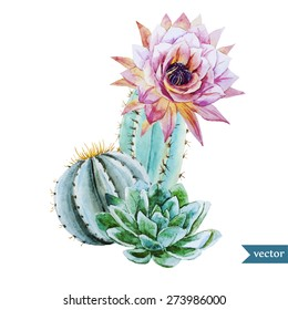 watercolor tropical drawing with cactus