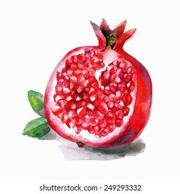 Watercolor vector artwork with a pomegranate. Hand drawn by watercolor