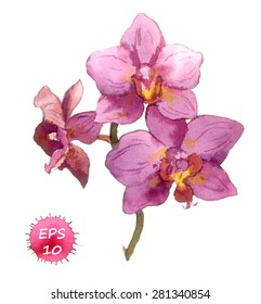 Watercolor vector botanical illustration - orchid flower