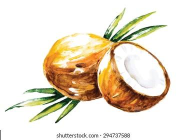Watercolor vector coconuts