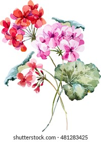 watercolor vector floral bouquet of geranium, isolated object