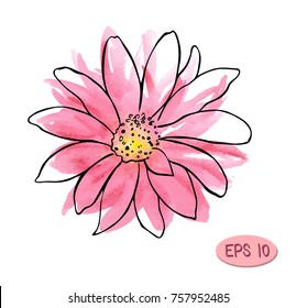 watercolor vector flower illustration, pink flower like daisy or chrysanthemum with plack contour