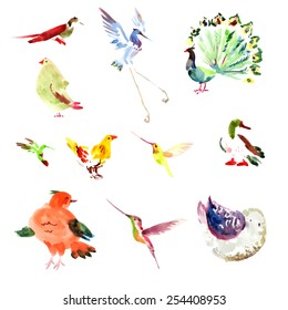 Watercolor vector hand drawn bird isolated on white background. Duck, peacock, stork, hen, humming bird, sparrow character.