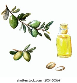 Watercolor vector illustration of argan brunch, fruits, nuts and cosmetic oil in the little bottle.
