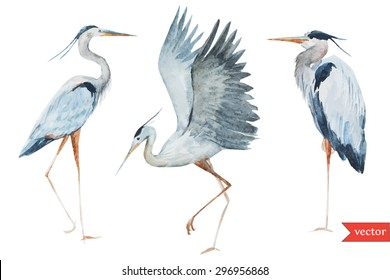 watercolor vector illustration with birds stork, heron, isolated object