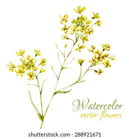 watercolor vector illustration of yellow flowers, isolated object, card