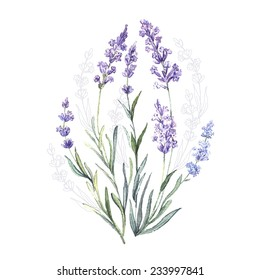 Watercolor vector Lavender. Watercolor.Vector illustration. Illustration for greeting cards, invitations, and other printing projects.