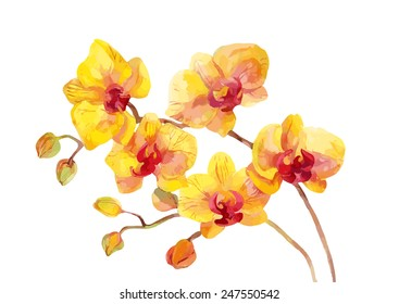Watercolor vector orchid flowers on white background.