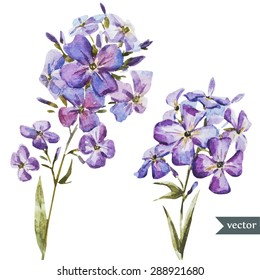 watercolor vector purple flowers, isolated object, card