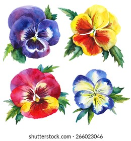 Watercolor vector set with pansies. Hand drawn by watercolors