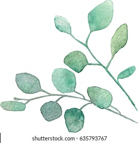 Watercolor vector silver dollar eucalyptus with round leaves and branches. Hand painted eucalyptus elements. Floral illustration isolated on white background. For design, textile and background.
