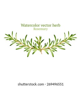 Watercolor vector vignette with rosemary