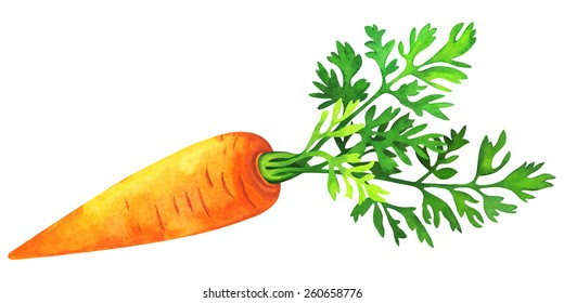 Watercolor vegetable carrot with green leaf closeup isolated on a white background. Hand painting on paper