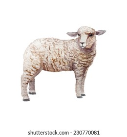 Watercolor vintage lamb standing. Hand drawn farm animal illustration in vector. Isolated on white background.