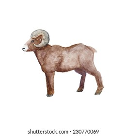 Watercolor vintage sheep standing. Hand drawn farm animal illustration in vector. Isolated on white background.