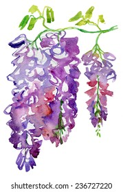 Watercolor with Wisteria flower background