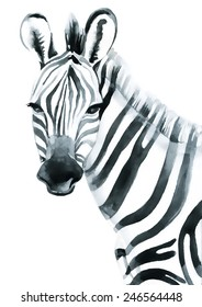Watercolor zebra isolated on white background. Vector illustration