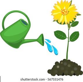 Watering can waters flower