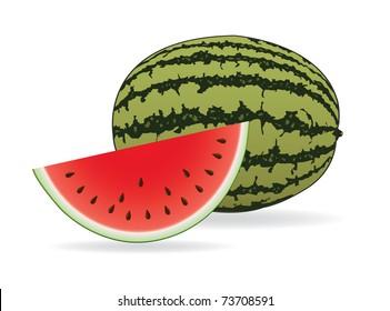 Watermelon  illustration vector