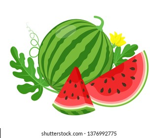 Watermelon and juicy slices, green leaves and yellow watermelon flower vector illustration in flat design. Summer food concept illustration isolated on white background.