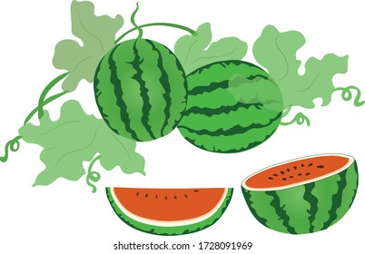 Watermelon ,watermelon tree ,water melon slide and watermelons fruits on white background
