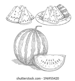 watermelon,vector hand drawing