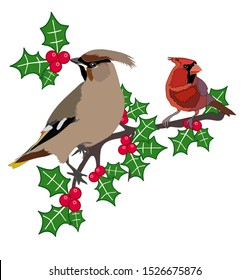 Waxwing and red cardinal on holly branch eating berries vector isolated winter illustration set Christmas decoration