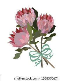 Wedding bouquet protea flowers south African flower illustration vector isolated three proteas and ribbon bow