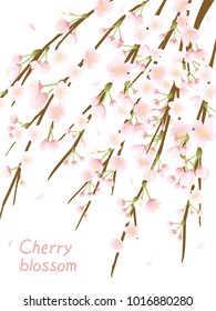 Weeping cherry blossom vector background.