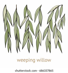 Weeping willow. Hand drawing. Set of vector illustrations with weeping willow branches