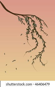 Weeping Willow tree branch background