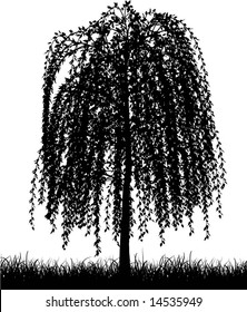 Weeping willow tree silhouette