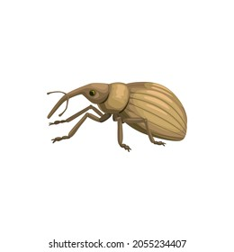 Weevil snout beetle icon, insect pest control disinsection and extermination, vector. Weevil or snout beetle bug, agrarian vermin and domestic parasite disinfection, agrarian pesticide pest control