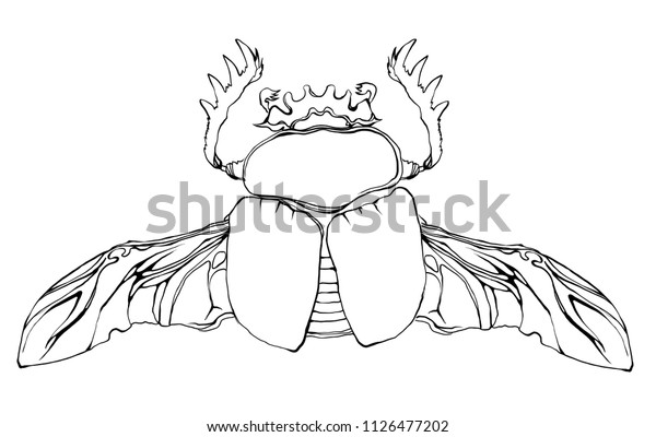 Weird Beautiful Beetle On White Background | Royalty-Free ...