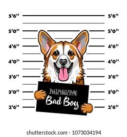 Welsh Corgi criminal. Arrest photo. Mugshot photo. Police placard, Police mugshot, lineup dog prisoner. Photo offender Vector illustration