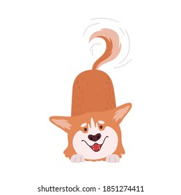 Welsh Corgi with Short Legs and Brown Coat Wagging the Tail Vector Illustration