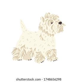 West highland white terrier or Westie vector illustration. Cute flat dog breed. Pet care and grooming fans concept. Fun animal for social networks, stickers, exhibition promo poster, banner