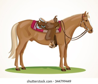Western Horse with saddle and bridle - Sorrel American Quarter Horse standing in side view
