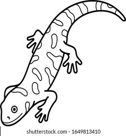 Western tiger salamander. Colorado State symbol.