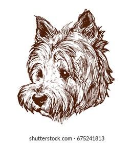 Westie west highland white terrier dog portrait on white background stock vector illustration