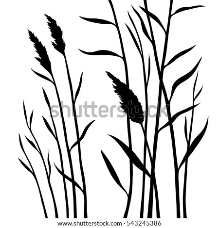 Wetland grass, silhouette of the reed isolated on white background. All branches are divided. Layers. Stock vector illustration.