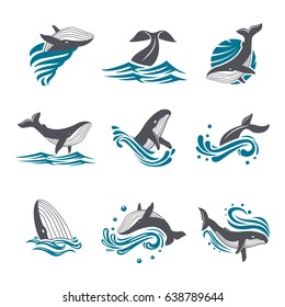 Whale among sea waves and splashes vector icon set. Illustration of a diving and floating whale in the blue sea. Marine mammal icon on white background.