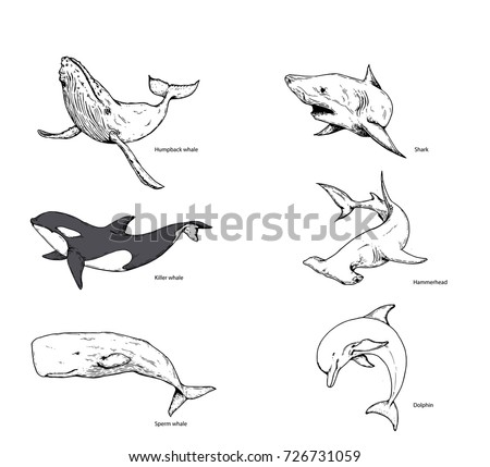 Whale Shark Dolphin Hand Drawing Stock Vector Royalty Free