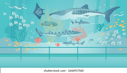 Whale and Tiger Shark, Stingray and Tropical Fish Swim in Saltwater Aquarium among Exotic Algae and Corals reef. Oceanarium in Museum or Zoo. View Under Water. Modern Flat Cartoon Vector Illustration